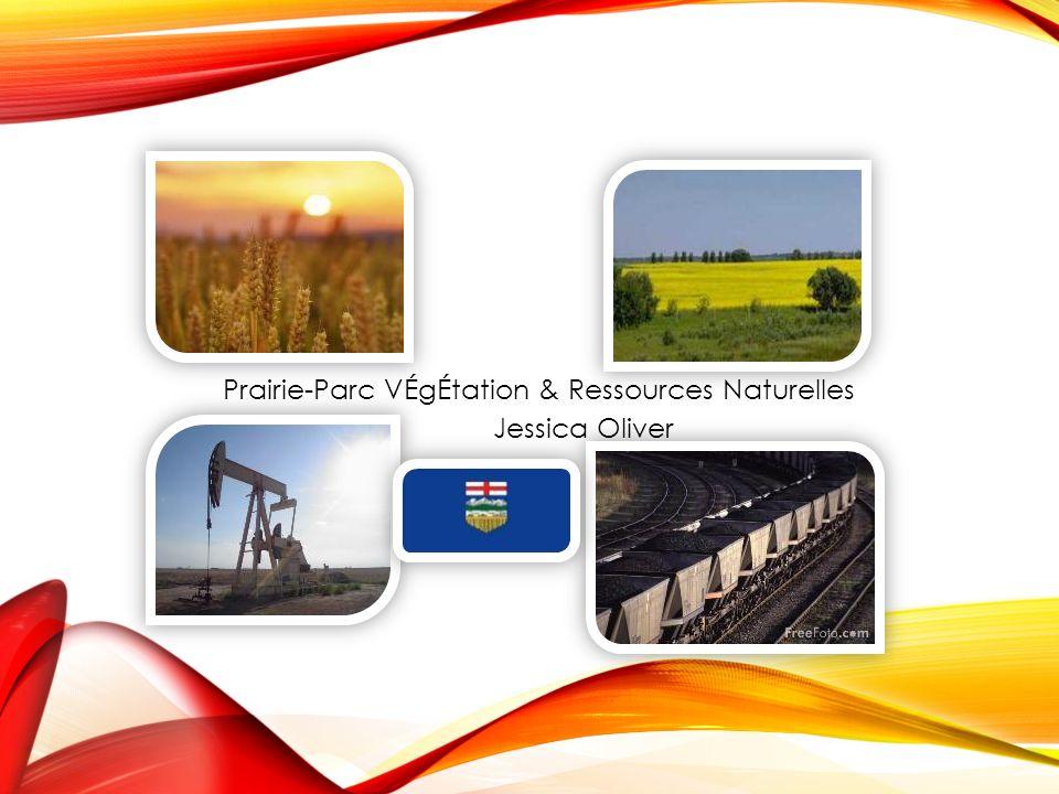 Prairie-Parc VÉgÉtation & Ressources Naturelles Jessica Oliver