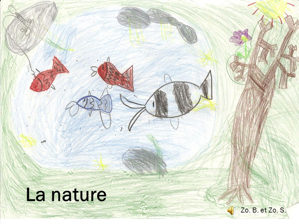La nature Zo. B. et Zo. S.