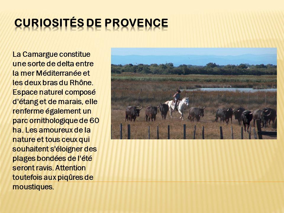 La Camargue constitue une sorte de delta entre la mer Méditerranée et les deux bras du Rhône. Espace naturel composé d'étang et de marais, elle renfer
