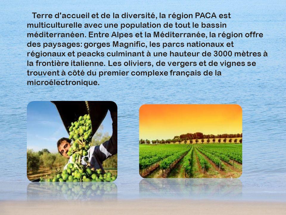 Terre d'accueil et de la diversité, la région PACA est multiculturelle avec une population de tout le bassin méditerranéen. Entre Alpes et la Méditerr