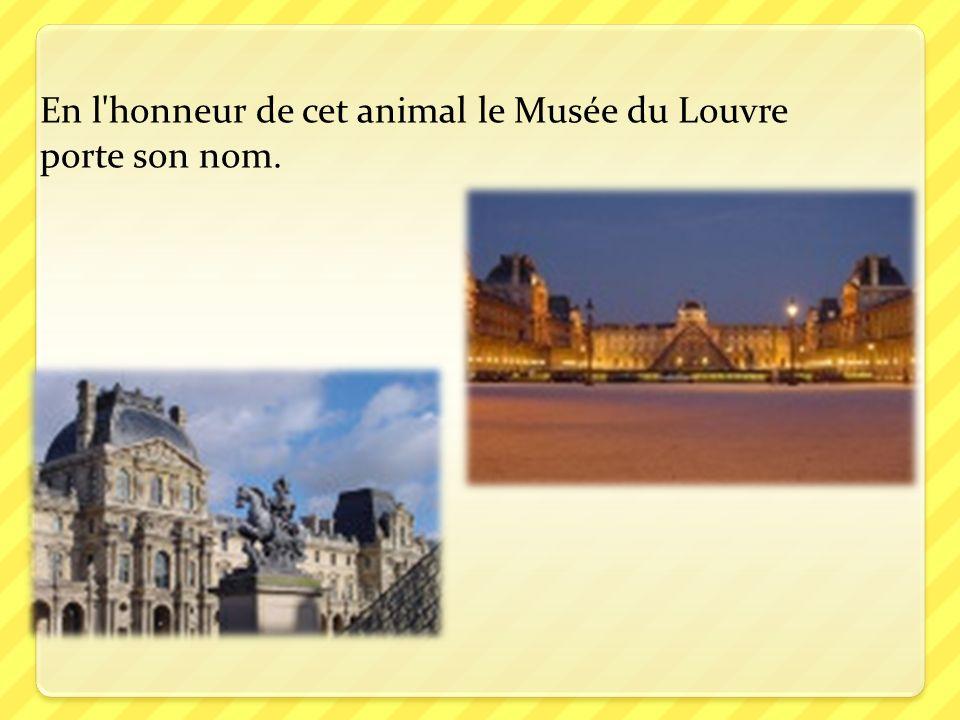 En l honneur de cet animal le Musée du Louvre porte son nom.