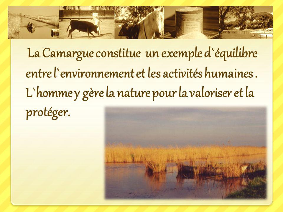 La Camargue constitue un exemple d`équilibre entre l`environnement et les activités humaines.