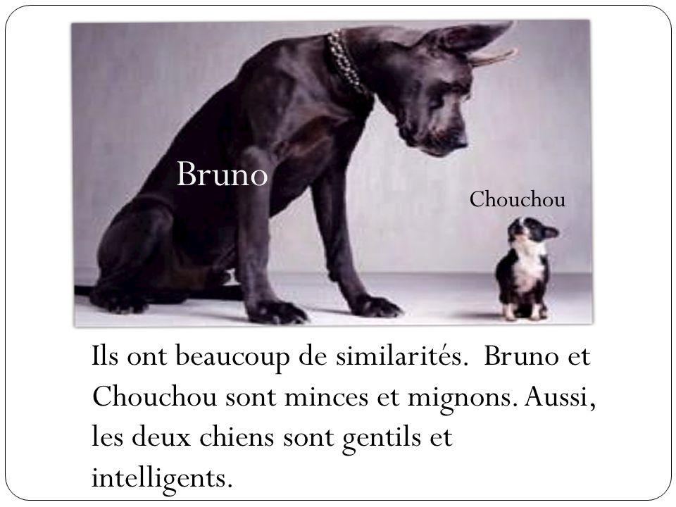 Bruno Chouchou Ils ont beaucoup de similarités. Bruno et Chouchou sont minces et mignons. Aussi, les deux chiens sont gentils et intelligents.
