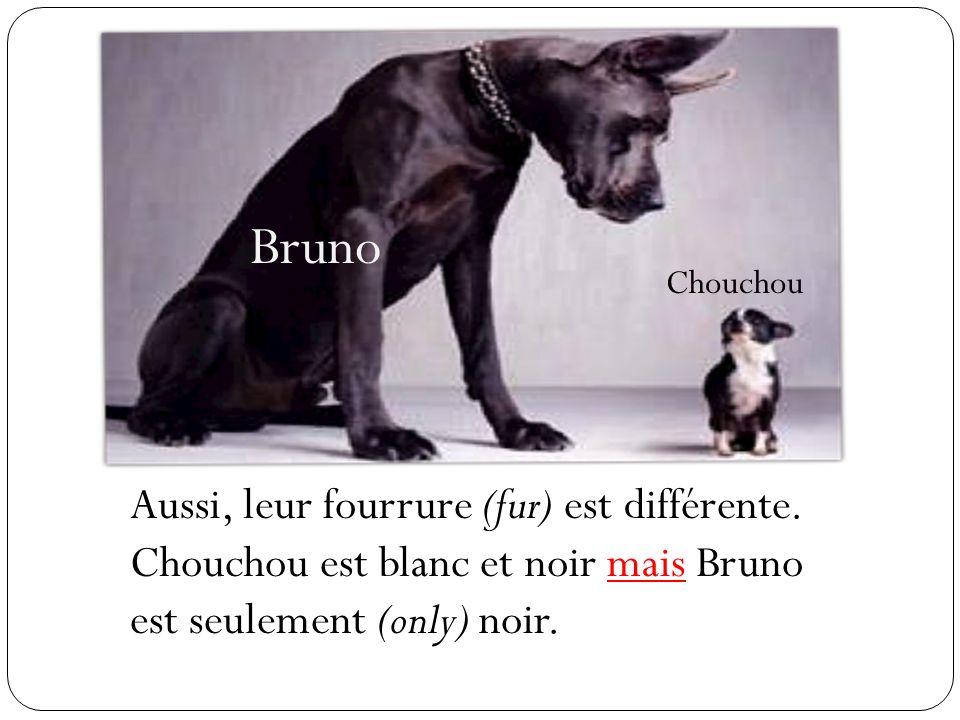 Bruno Chouchou Aussi, leur fourrure (fur) est différente. Chouchou est blanc et noir mais Bruno est seulement (only) noir.
