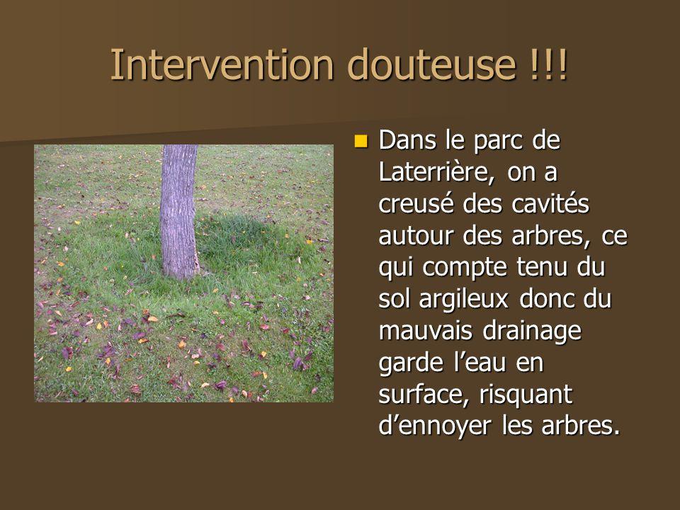 Intervention douteuse !!! Dans le parc de Laterrière, on a creusé des cavités autour des arbres, ce qui compte tenu du sol argileux donc du mauvais dr