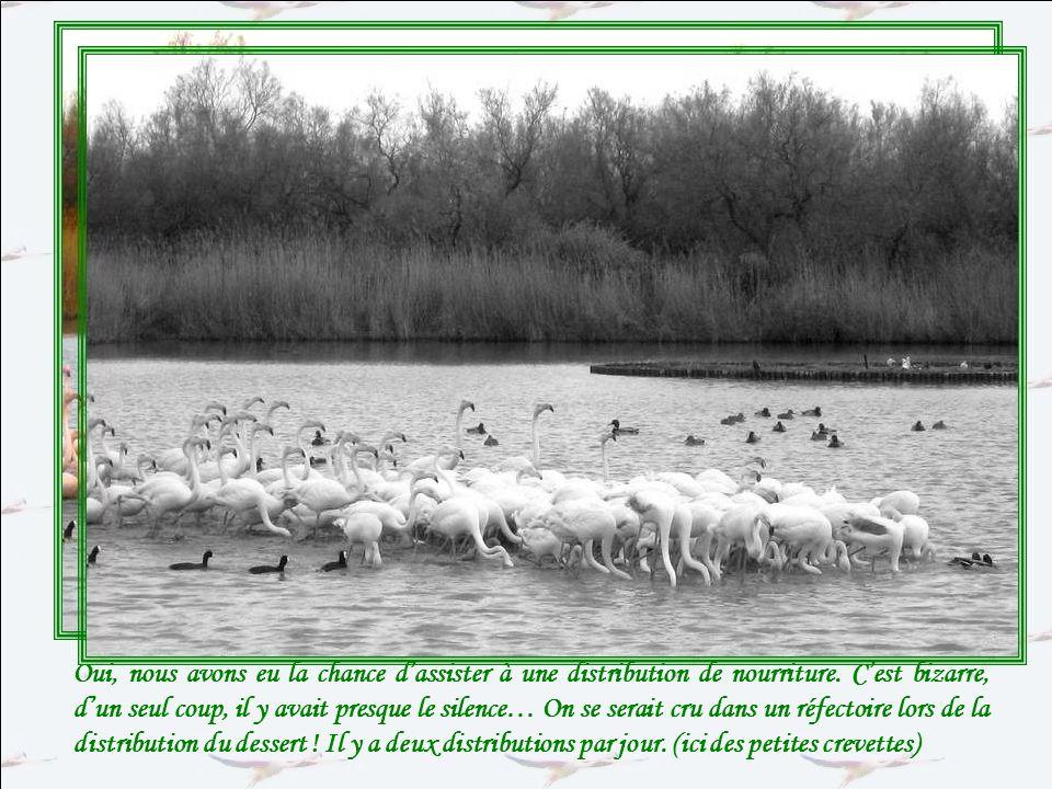 Un grand moment se prépare… Voyez le gardien du parc avec son seau… Et voyez accourir tous les oiseaux .
