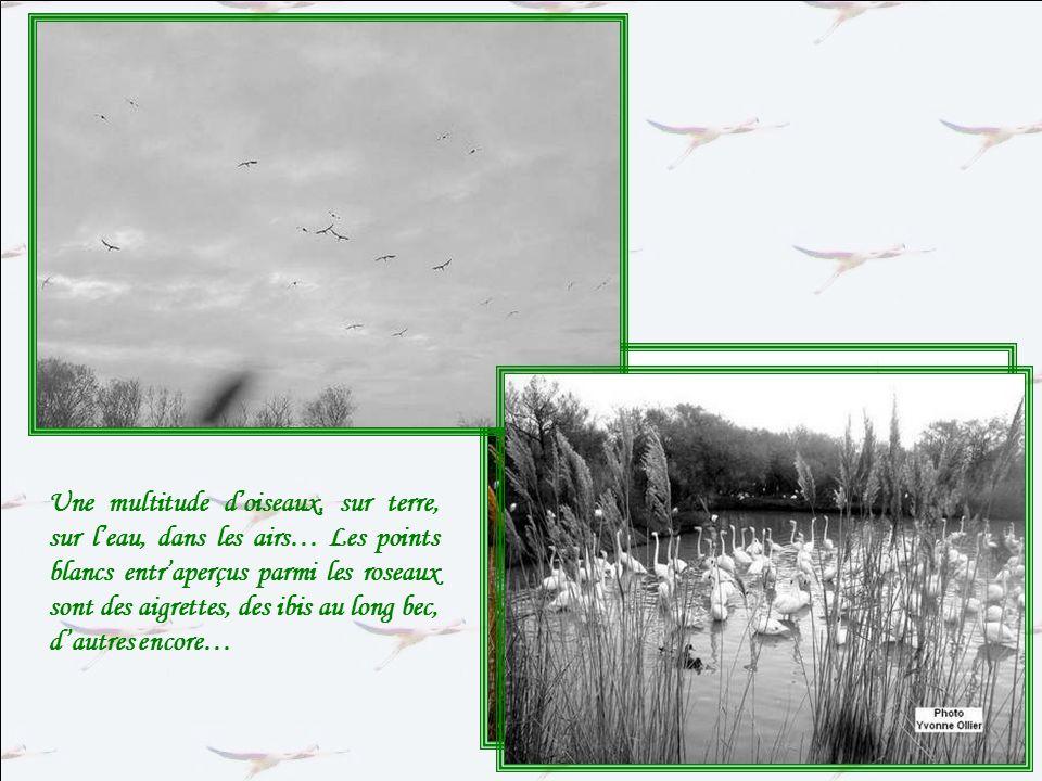 Dès lentrée aussi, nous sommes rassurées ! Les oiseaux sont bien là… Les cris bruyants des flamants nous assourdissent !!!