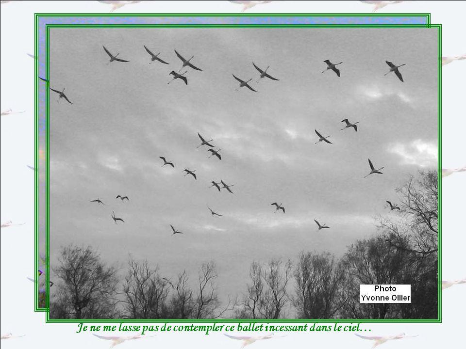 Une multitude doiseaux, sur terre, sur leau, dans les airs… Les points blancs entraperçus parmi les roseaux sont des aigrettes, des ibis au long bec,