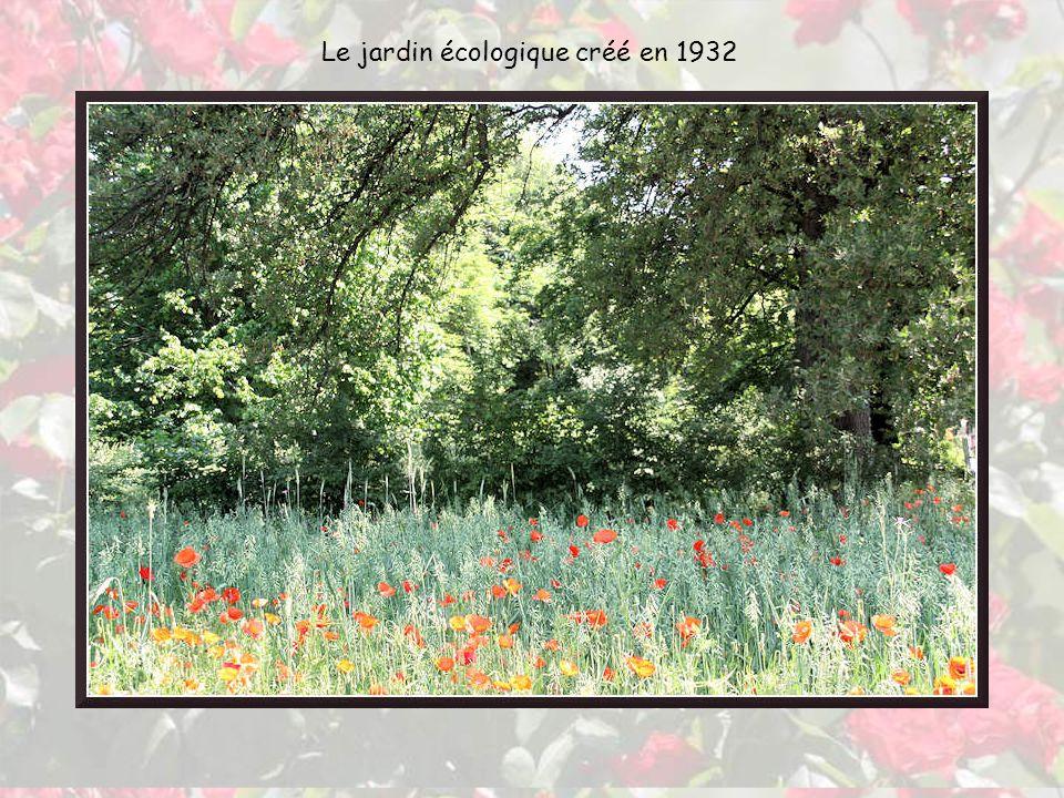 La souche, à gauche a été découverte dans une carrière de sable en Essonne, dressée verticalement parmi plusieurs dizaines dautres.