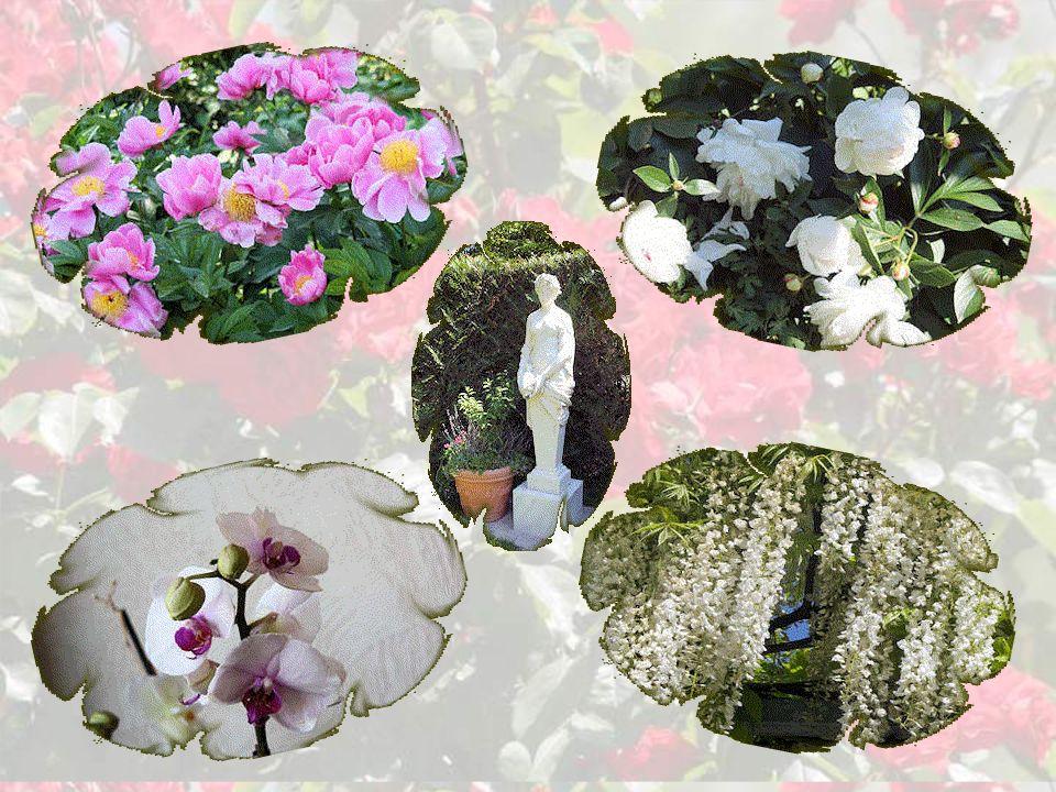 Le jardin des iris et fleurs rares