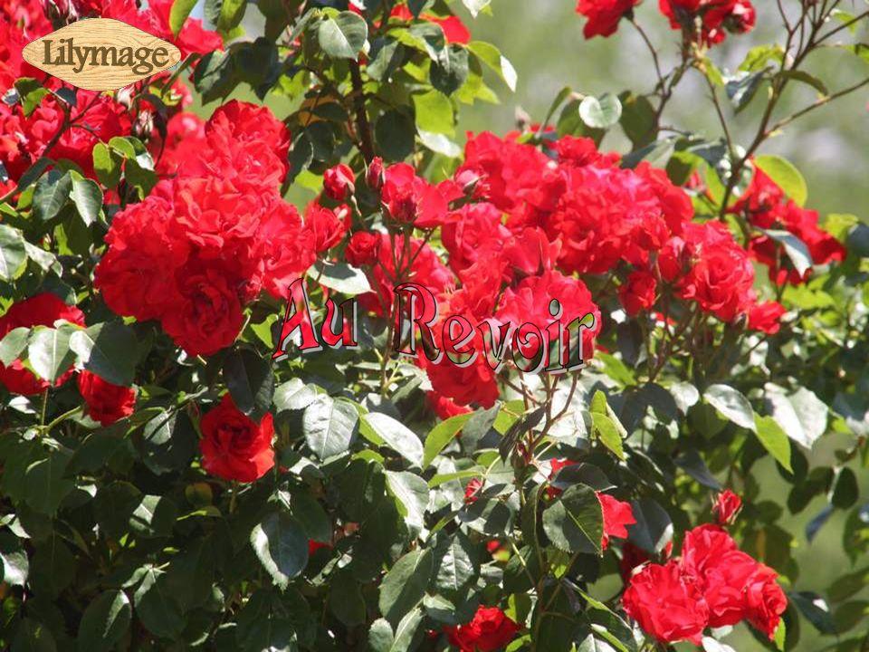 Informations prises sur place; Musique de Richard Clayderman : Jardin secret.