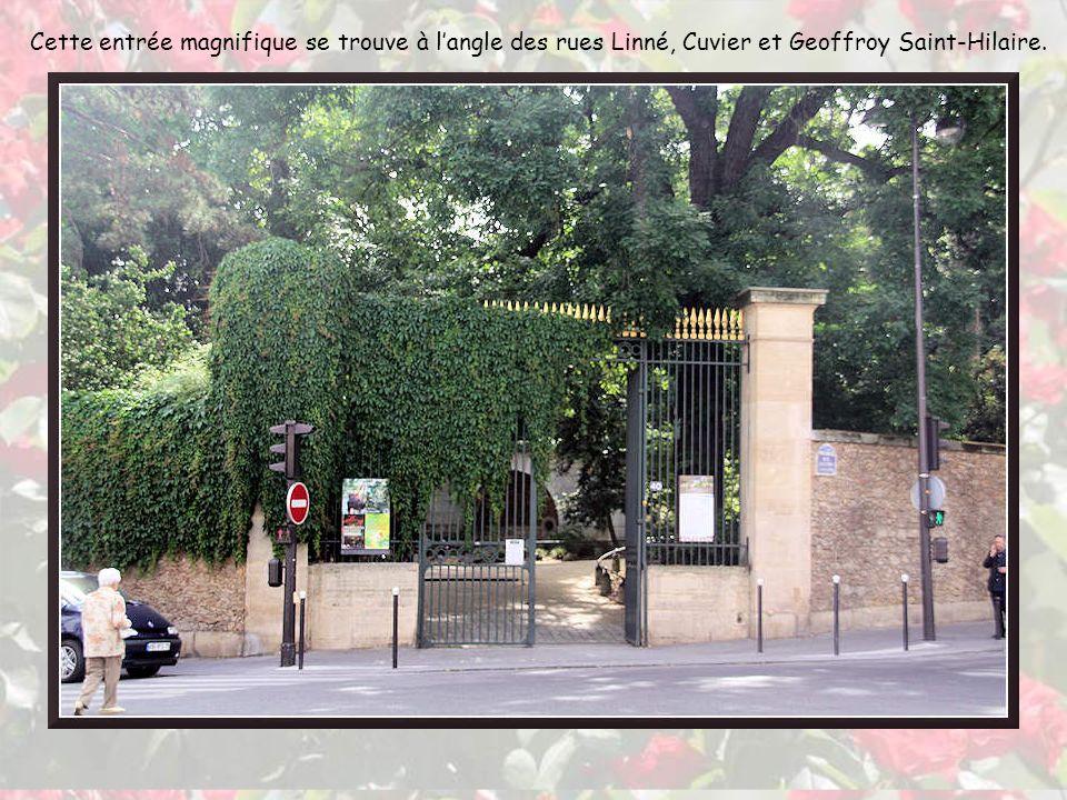 Ce premier volet sur le Jardin des Plantes est une flânerie à travers le parc et la roseraie.
