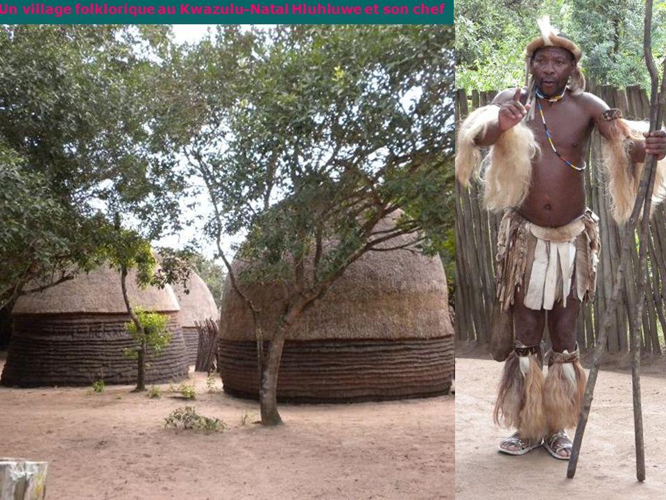 Knysa, marche dans la réserve naturelle de Featherland Océan Indien