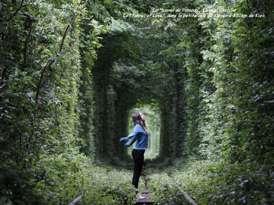 Le tunnel de l amour , Kleven, Ukraine Le Tunnel of Love , dans la petite ville de Kleven à 350km de Kiev.