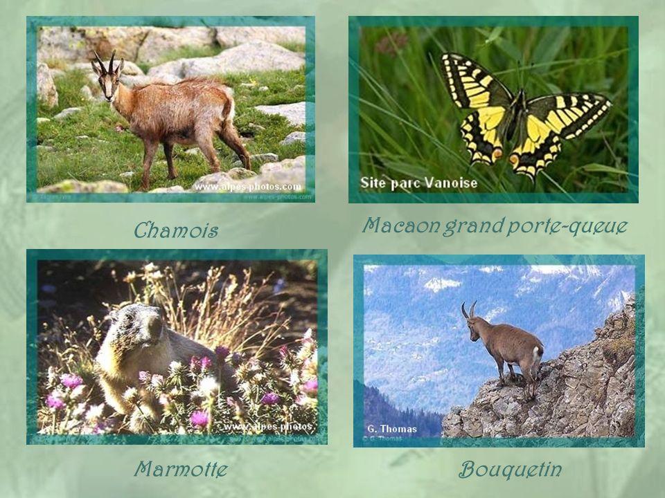 Plusieurs villages de la Haute-Maurienne sont englobés dans le Parc National de la Vanoise, qui fut créé en 1963 et comprend également une partie de l