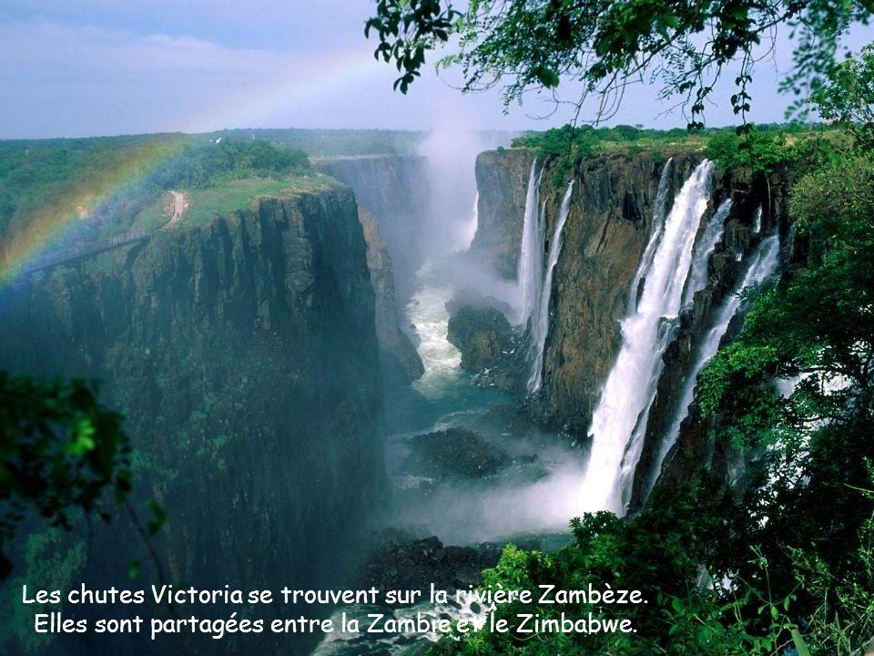 Les chutes Victoria ont une largeur de 1,7 km et une hauteur de 108 m, en faisant le plus grand rideau deau au monde.