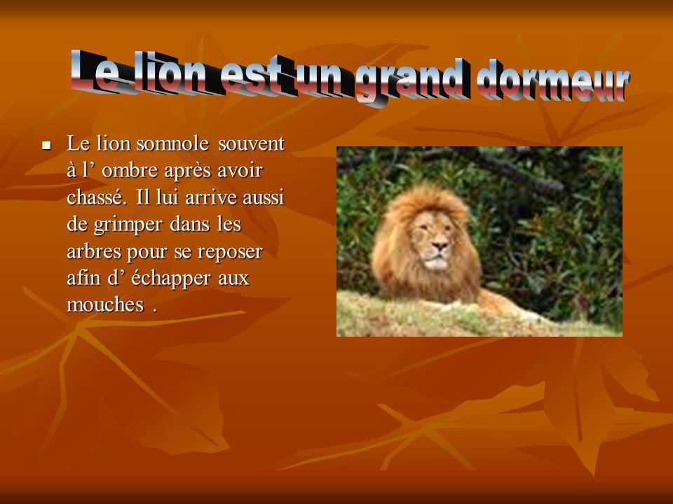 Le lion somnole souvent à l ombre après avoir chassé. Il lui arrive aussi de grimper dans les arbres pour se reposer afin d échapper aux mouches.