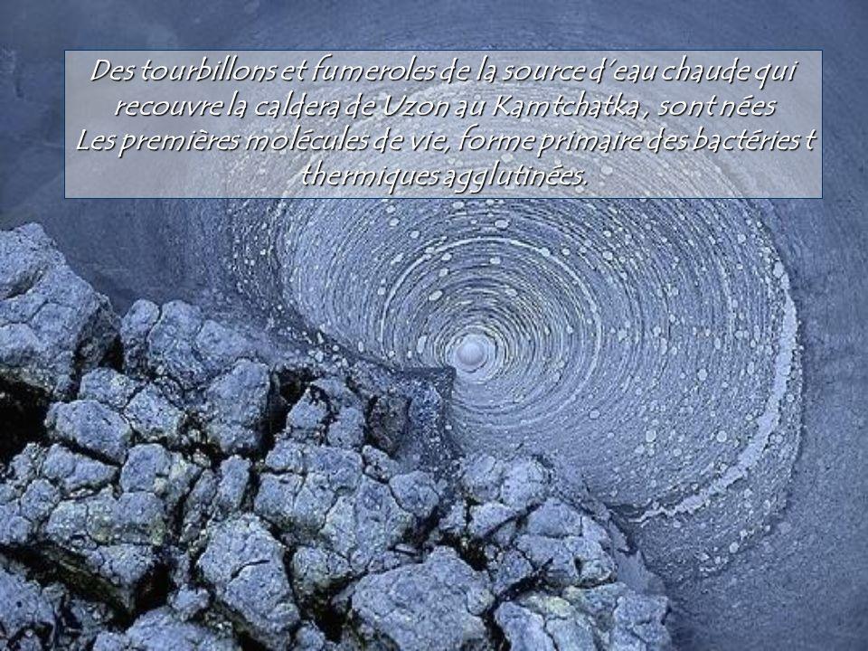 Fishing Cone émerge de létang hydrothermal de West Tham Geyser dans le parc naturel du Yellowstone, USA. Ce petit cône de silice est formé par lascens