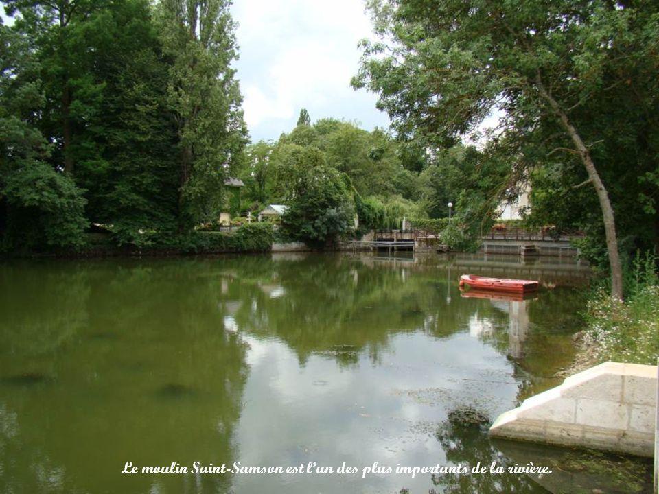 Sur la rivière, il y a de nombreux canards colverts, mais aussi des castors.