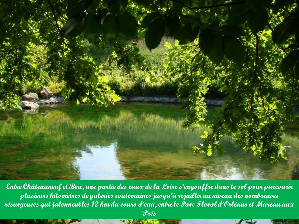 Entre Châteauneuf et Bou, une partie des eaux de la Loire sengouffre dans le sol pour parcourir plusieurs kilomètres de galeries souterraines jusquà rejaillir au niveau des nombreuses résurgences qui jalonnent les 12 km du cours deau, entre le Parc Floral dOrléans et Mareau aux Prés