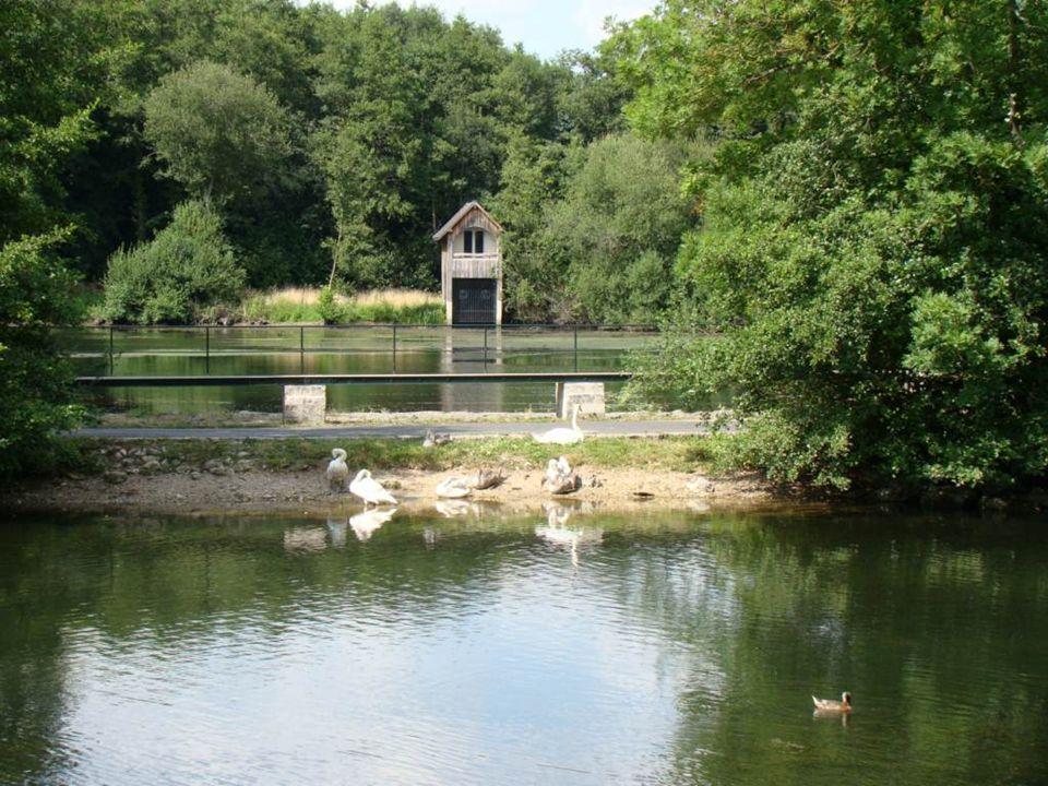 Au cours de la promenade nous pouvons voir une quantité de cygnes ; le premier couple a été introduit par le syndicat dinitiative en 1954.