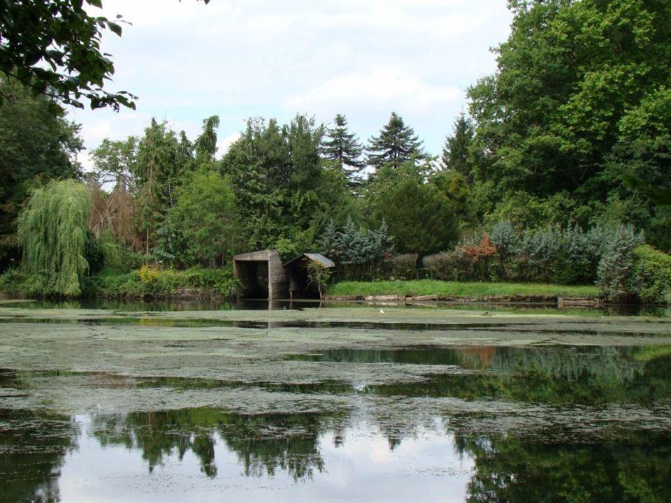Le Loiret est une rivière prisée des pêcheurs…en voici la raison