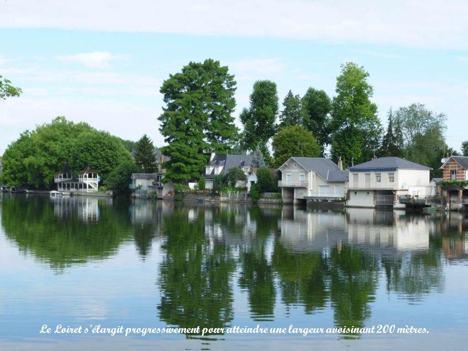 Le Loiret s élargit progressivement pour atteindre une largeur avoisinant 200 mètres.