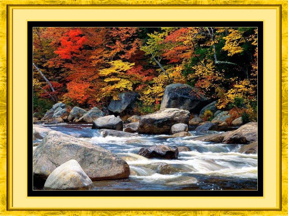 Regardez la nature se métamorphoser pour nous éblouir de beautés et de couleurs,