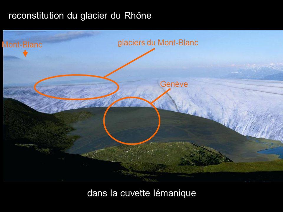 bloc de poudingue de Vallorcine déposé par le glacier du Rhône il y a 22 000 ans exhumé dans le parc du muséum dhistoire naturelle de Genève
