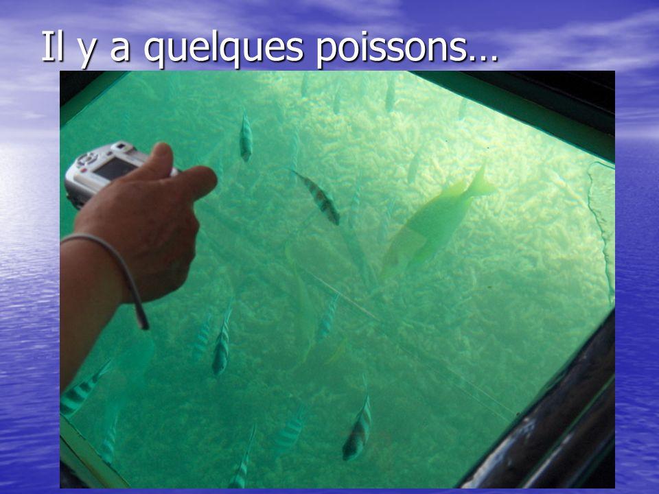 Il y a quelques poissons…