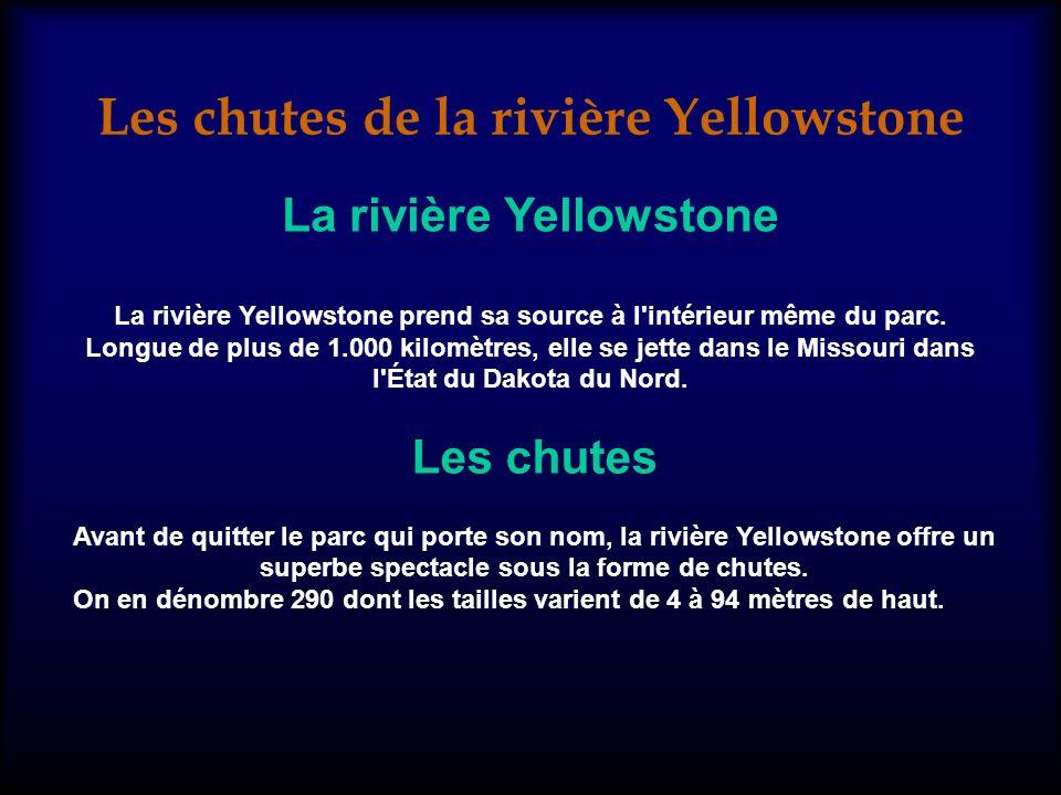 La rivière Yellowstone La rivière Yellowstone prend sa source à l intérieur même du parc.