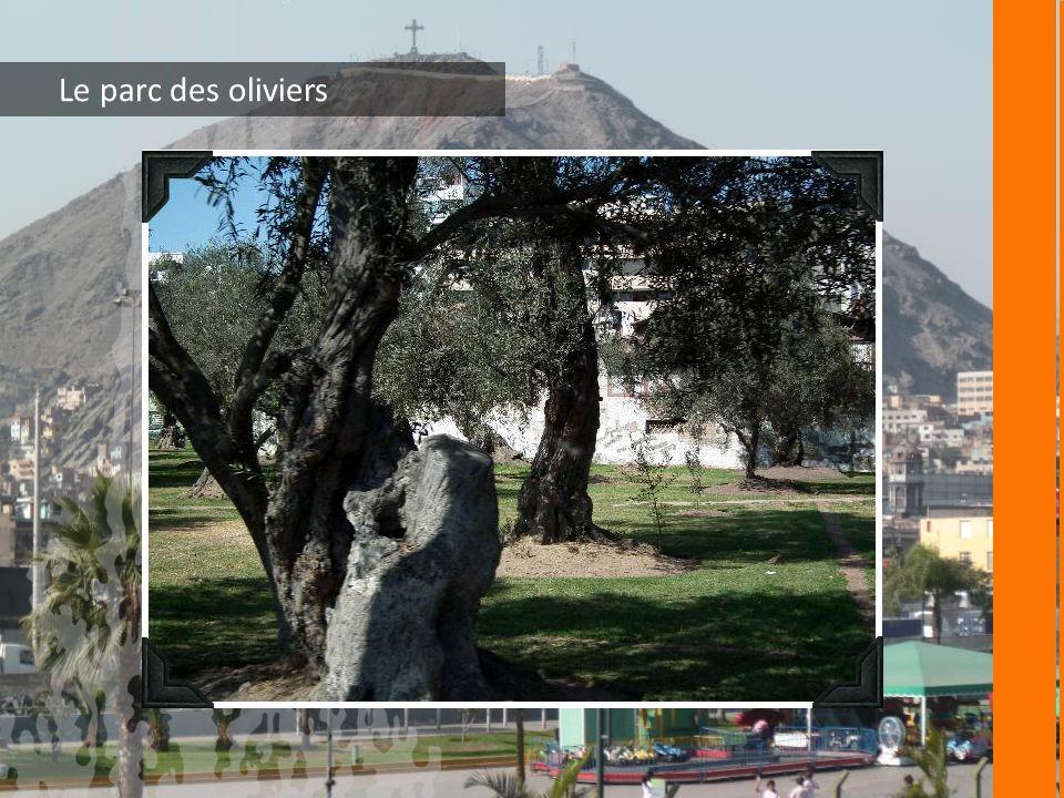 Le parc des oliviers