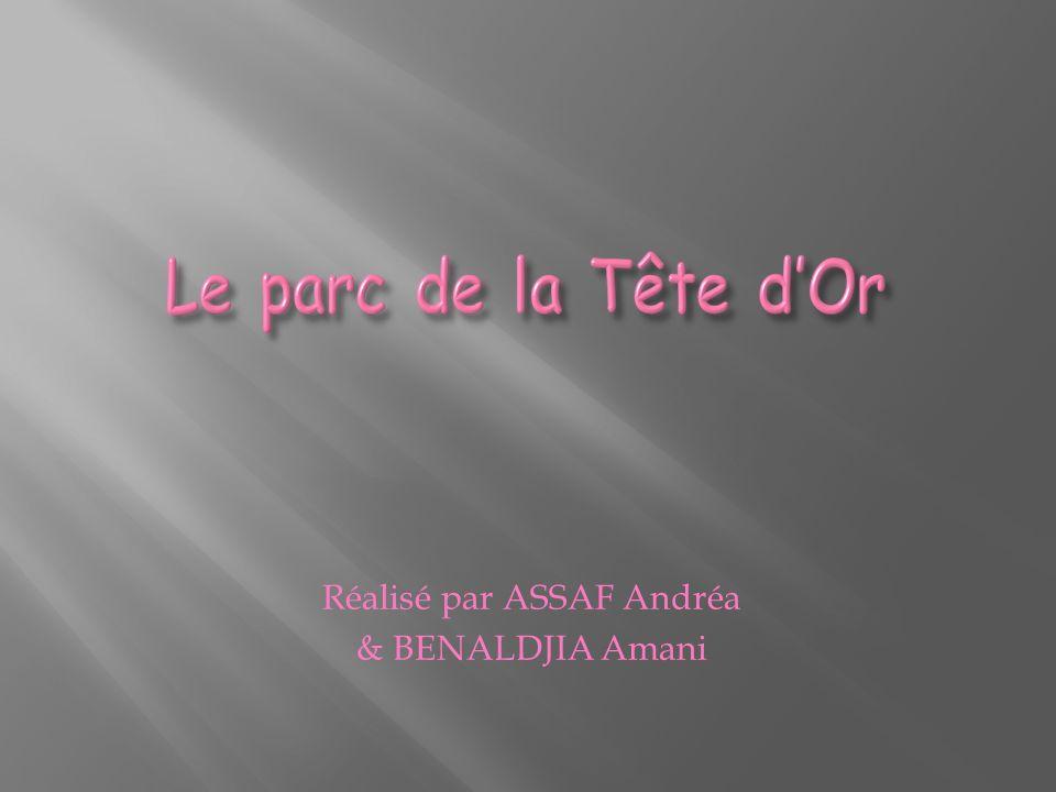 Réalisé par ASSAF Andréa & BENALDJIA Amani