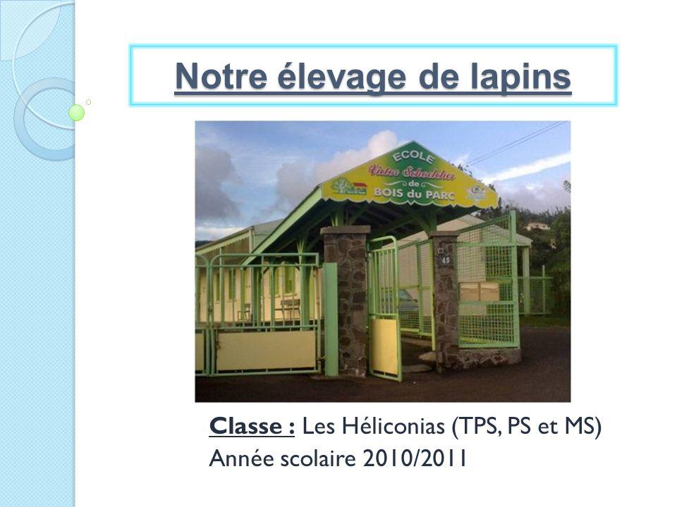 Classe : Les Héliconias (TPS, PS et MS) Année scolaire 2010/2011 Notre élevage de lapins
