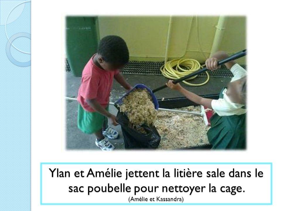 Ylan et Amélie jettent la litière sale dans le sac poubelle pour nettoyer la cage.