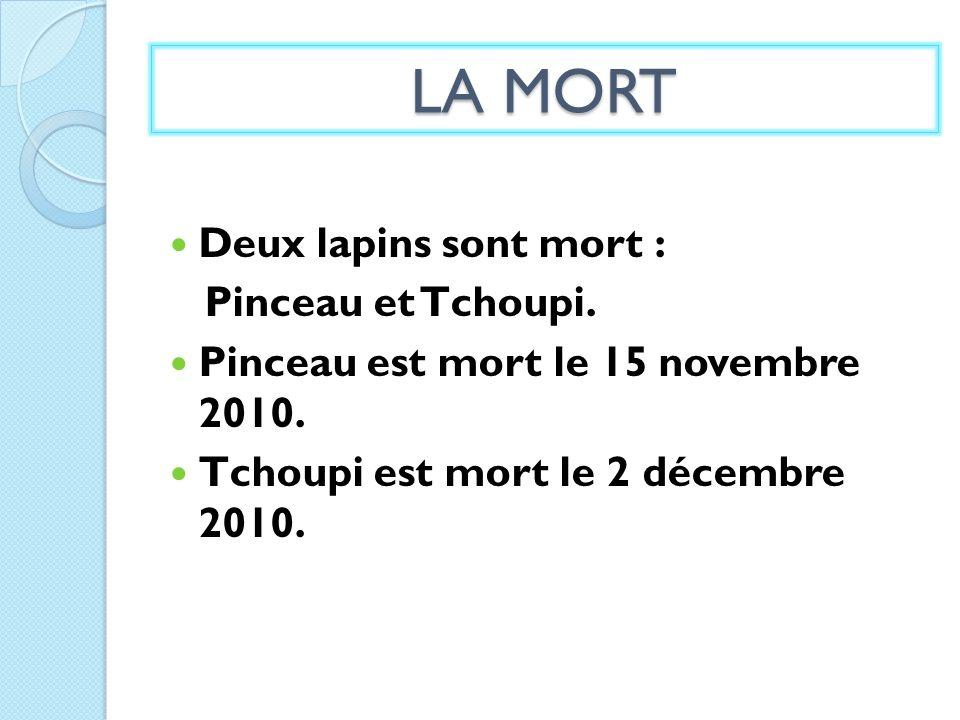 LA MORT Deux lapins sont mort : Pinceau et Tchoupi. Pinceau est mort le 15 novembre 2010. Tchoupi est mort le 2 décembre 2010.