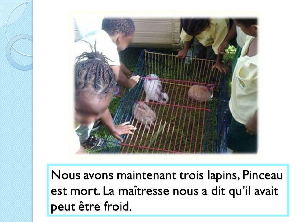 Nous avons maintenant trois lapins, Pinceau est mort. La maîtresse nous a dit quil avait peut être froid.