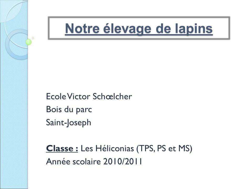 Ecole Victor Schœlcher Bois du parc Saint-Joseph Classe : Les Héliconias (TPS, PS et MS) Année scolaire 2010/2011 Notre élevage de lapins