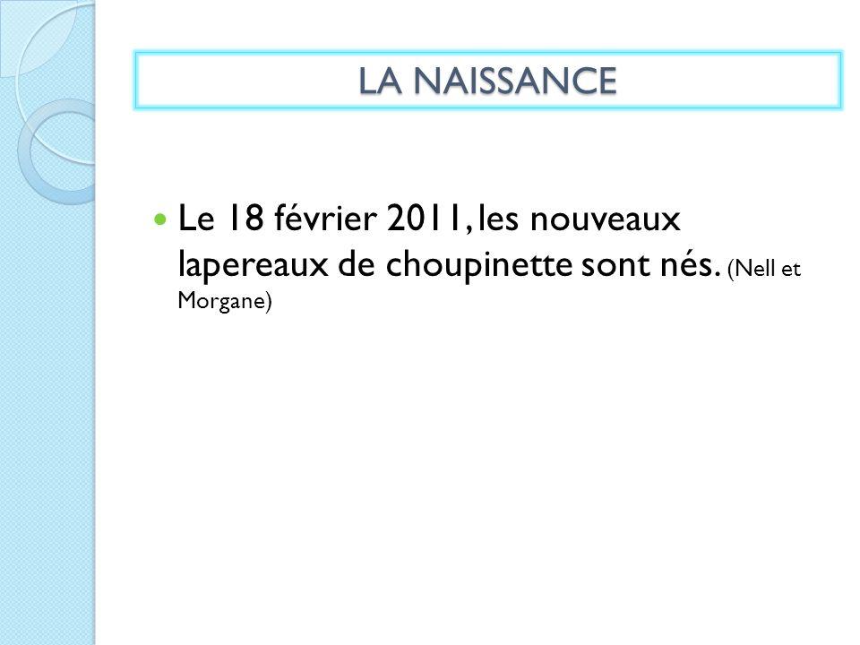 Le 18 février 2011, les nouveaux lapereaux de choupinette sont nés. (Nell et Morgane) LA NAISSANCE