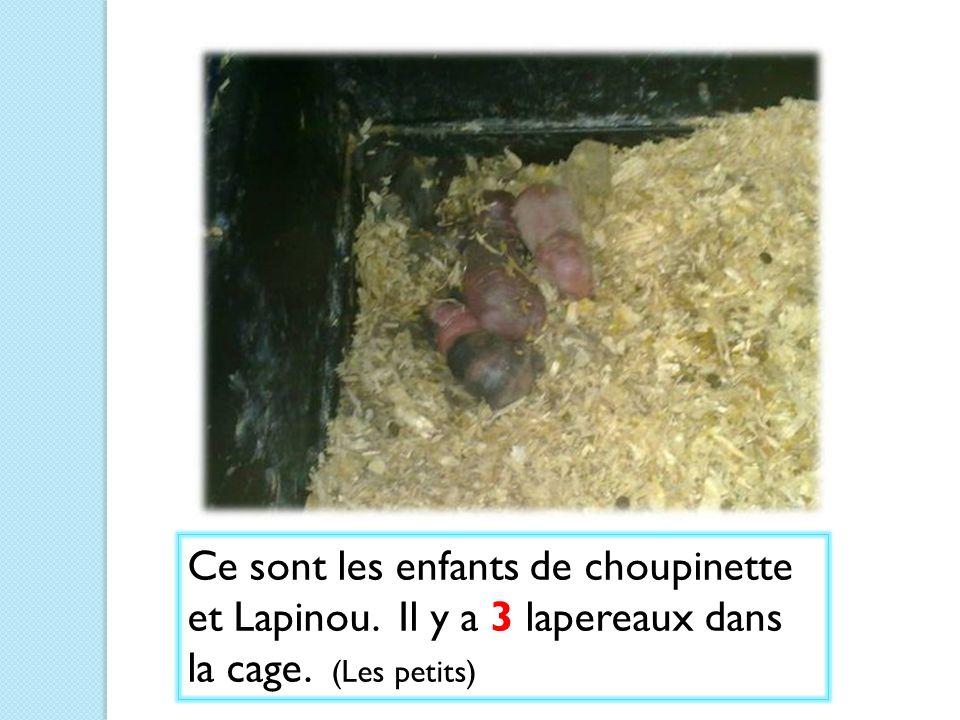 Ce sont les enfants de choupinette et Lapinou. Il y a 3 lapereaux dans la cage. (Les petits)