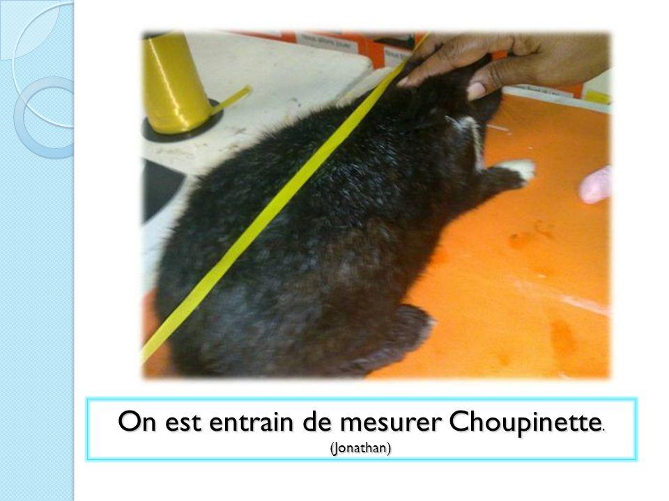 On est entrain de mesurer Choupinette. (Jonathan)