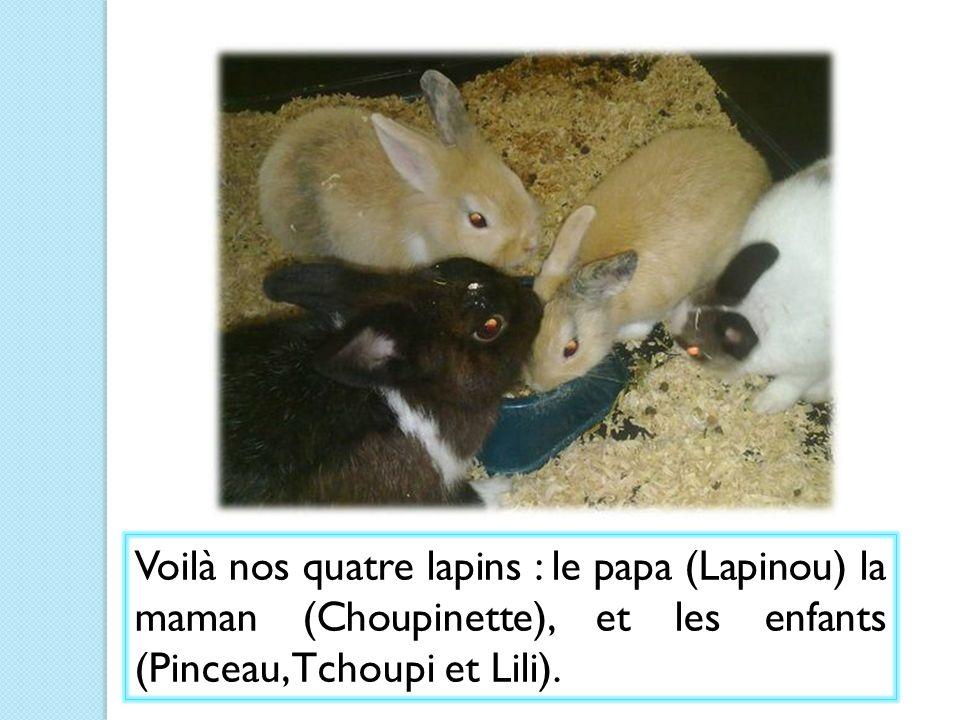 Avec la maîtresse nous avons chercher un prénom pour chaque lapereau Le lapin gris sappelle Lino (Morgane) Le lapin blanc sappelle Titi Le Lapin marron et gris sappelle Toto (Nell) Le prénom des lapins