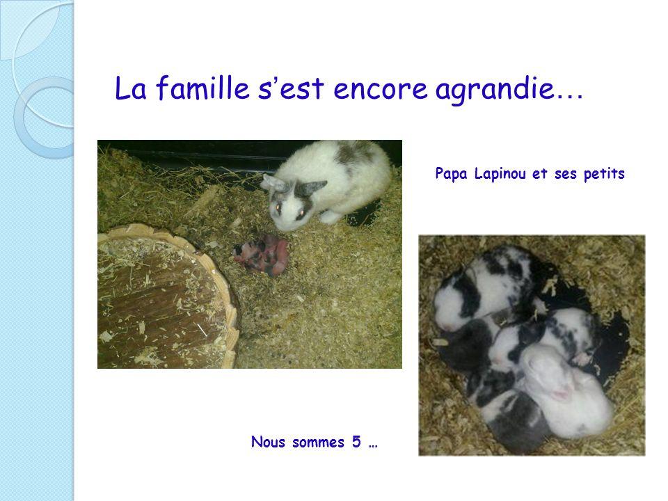 La famille s est encore agrandie … Papa Lapinou et ses petits Nous sommes 5 …