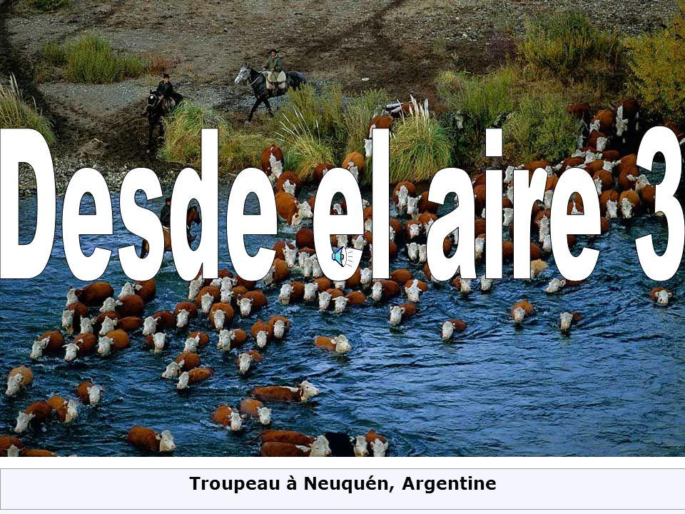Troupeau à Neuquén, Argentine
