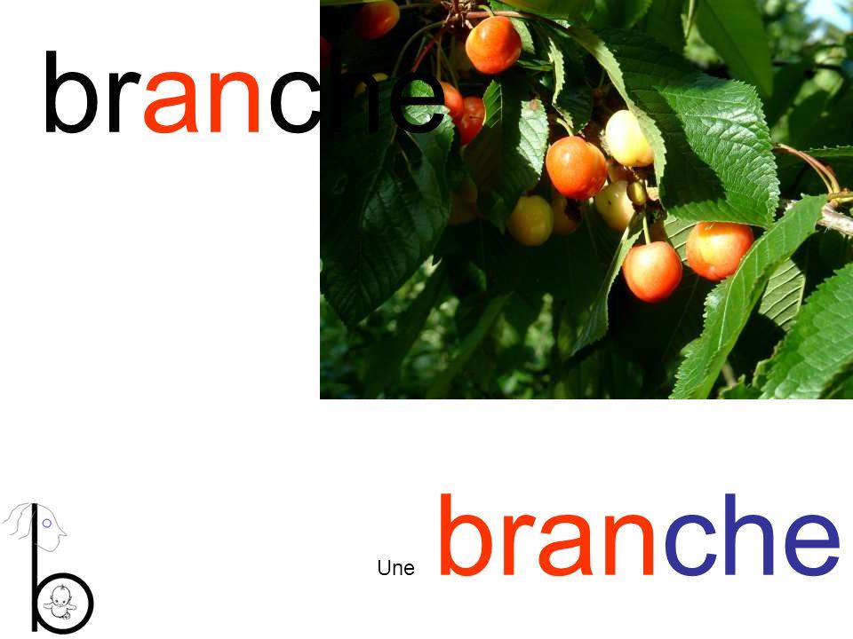 branche Une branche