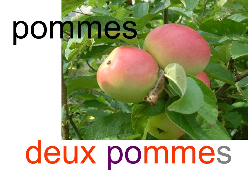 pommes deux pommes