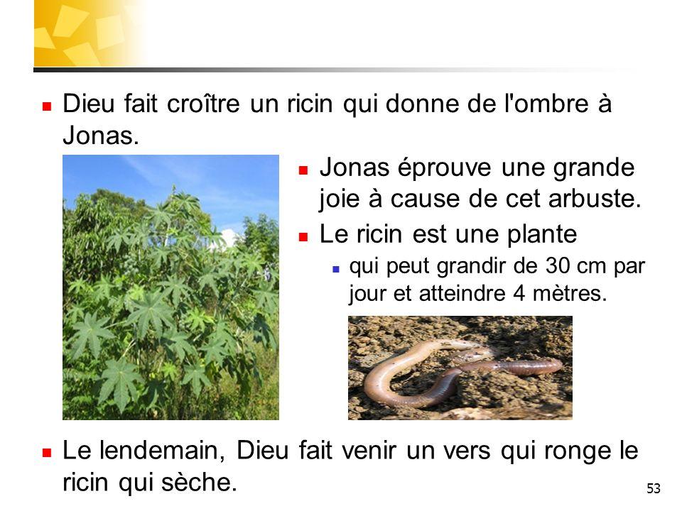 53 Dieu fait croître un ricin qui donne de l'ombre à Jonas. Jonas éprouve une grande joie à cause de cet arbuste. Le ricin est une plante qui peut gra