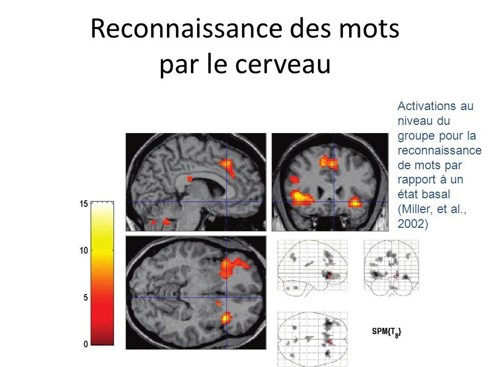 Reconnaissance des mots par le cerveau Activations au niveau du groupe pour la reconnaissance de mots par rapport à un état basal (Miller, et al., 200