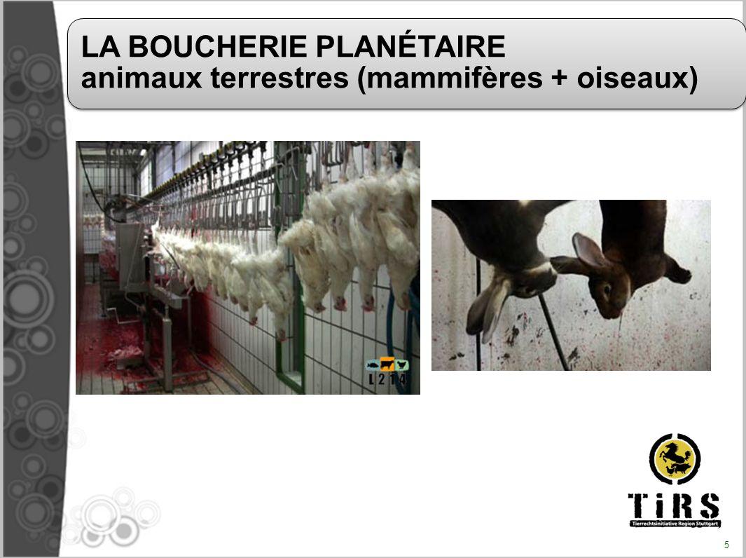 Dans le monde (Source FAO 2007) : Plus de 58 milliards d animaux abattus En France (Source Agreste, estimation 2008) : 1,111 milliard d animaux abattus Le nombre d animaux morts de l élevage est très supérieur à ce chiffre car beaucoup sont tués ou meurent avant l âge d abattage.