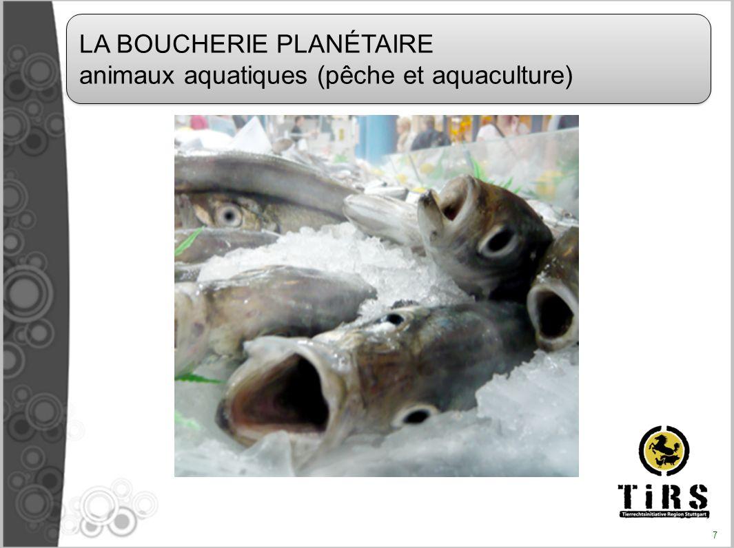 Dans le monde (en 2006, d après la FAO) Pêche : 92 millions de tonnes Aquaculture : 52 millions de tonnes Pêche + aquaculture : 144 millions de tonnes + les prises rejetées à la mer (« bycatch ») 38 millions de tonnes (estimation WWF) Total annuel : plus de 180 millions de tonnes soit plus dun millier de milliards d animaux sacrifiés En France (en 2005, d après la FAO) Pêche : 574 378 tonnes Aquaculture : 258 437 tonnes Total annuel : 832 793 tonnes COMBIEN D ANIMAUX AQUATIQUES SONT TUÉS PAR AN POUR LA CONSOMMATION HUMAINE .